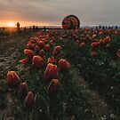 Tulips at Dawn by Rubyheart