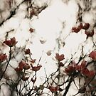 Dogwood Blossoms by Rubyheart