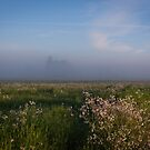 Foggy Field by Rubyheart