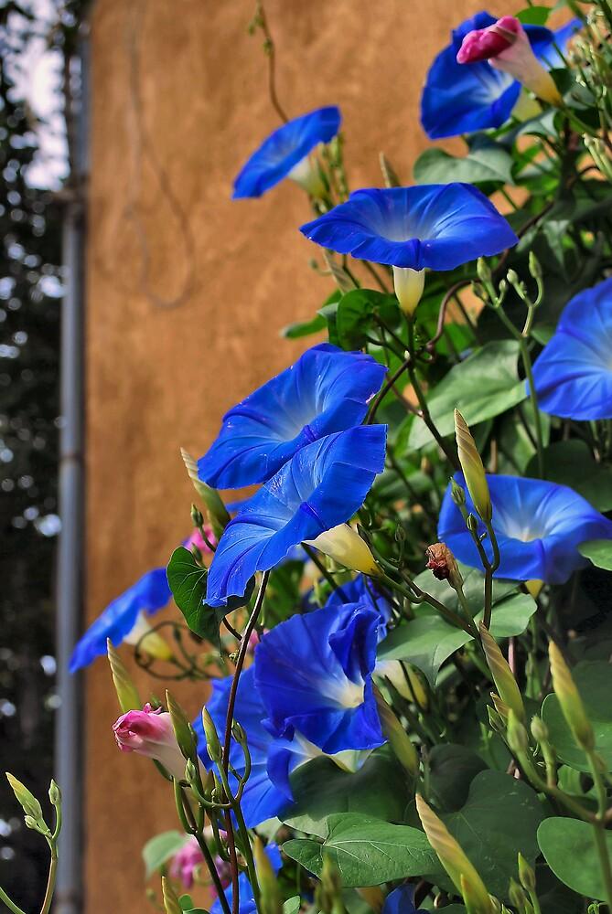 Heavenly Blue by James Edward Creamer