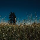 Tall Grasses by Rubyheart