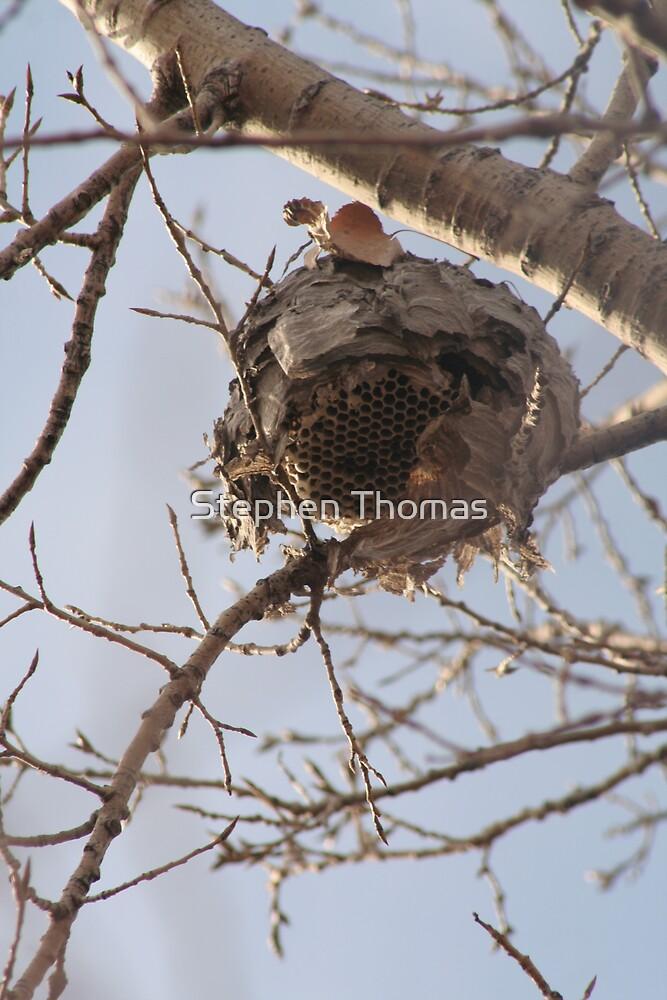 Abandoned Wasp Nest by Stephen Thomas
