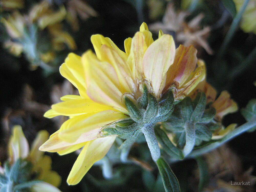 yellow flowerfade by Laurkat
