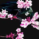 Tui Feeding on Cherry Blossoms by Flynnthecat