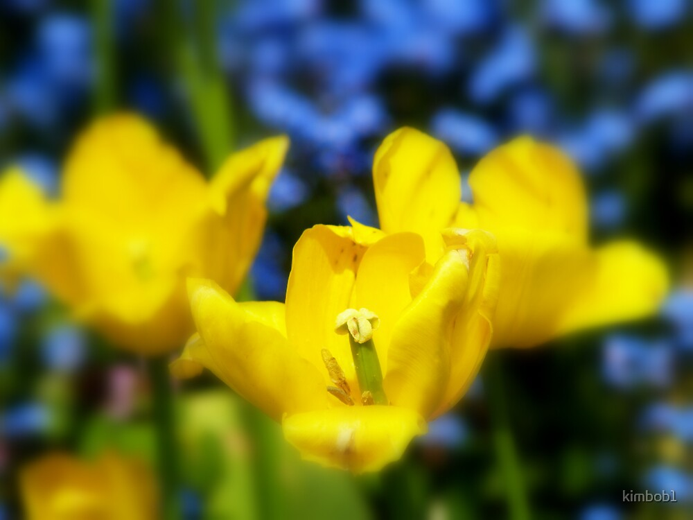 yellow mellow by kimbob1