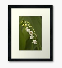 Lilly-of-the-Valley  Framed Print
