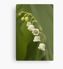 Lilly-of-the-Valley  Metal Print
