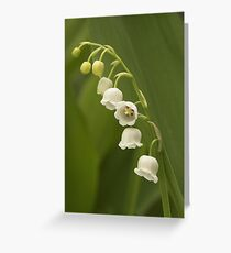 Lilly-of-the-Valley  Greeting Card