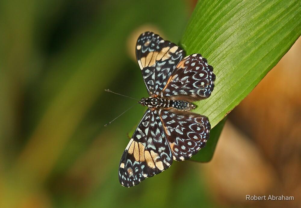 Red Cracker Butterfly by Robert Abraham