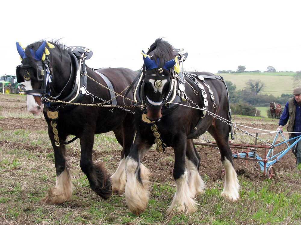 ploughing  by Caroline Anderson
