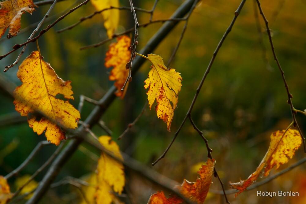 lingering leaves by Robyn Bohlen