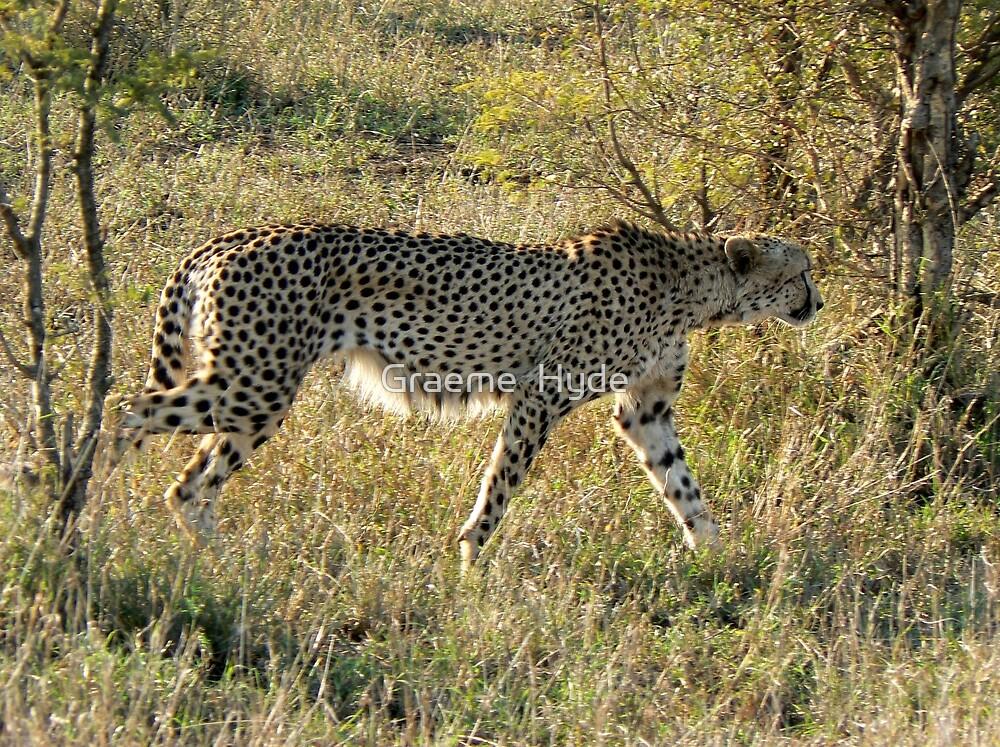 Cheetah in Kruger by Graeme  Hyde