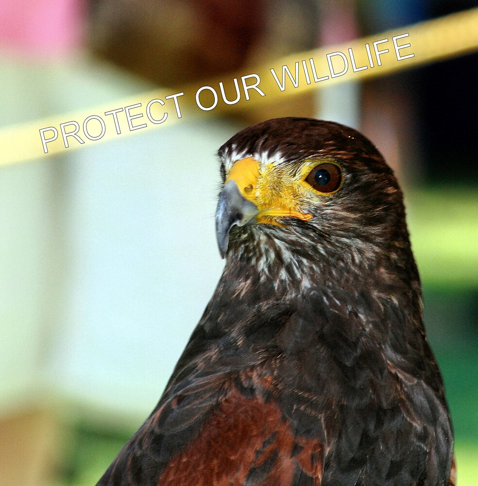 PROTECT OUR WILDLIFE HAWK by BOLLA67