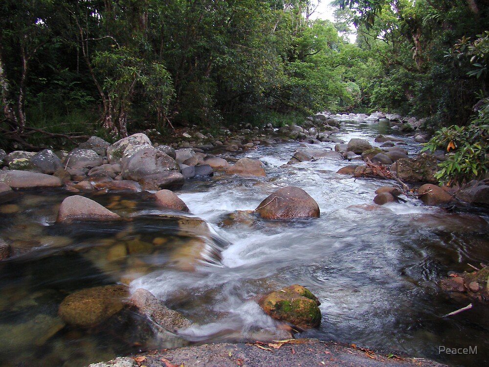 Rainforest stream by PeaceM