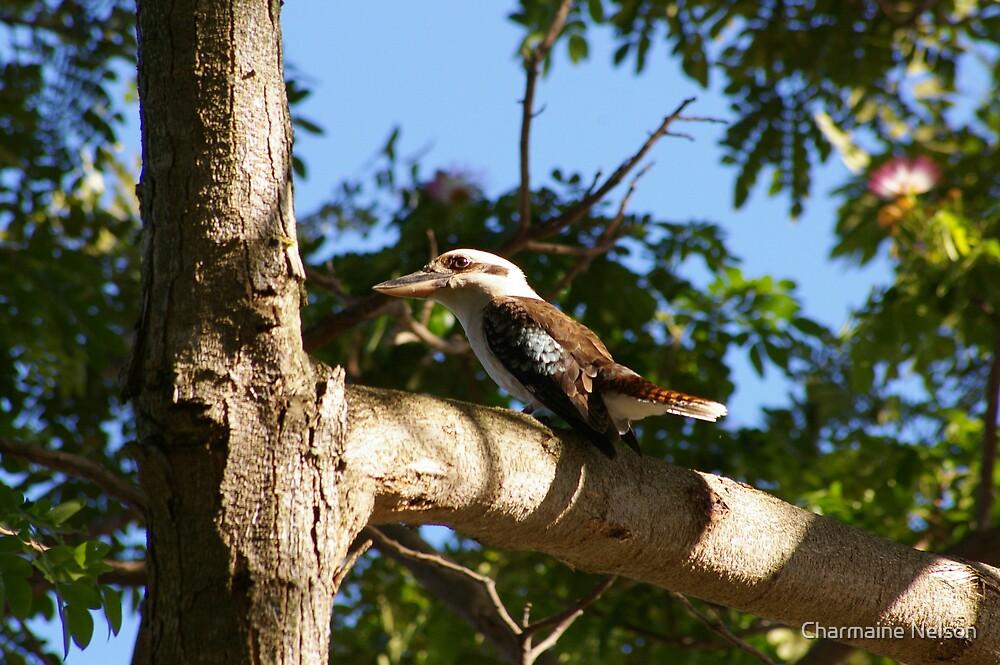 Kookaburra by Charmaine Nelson