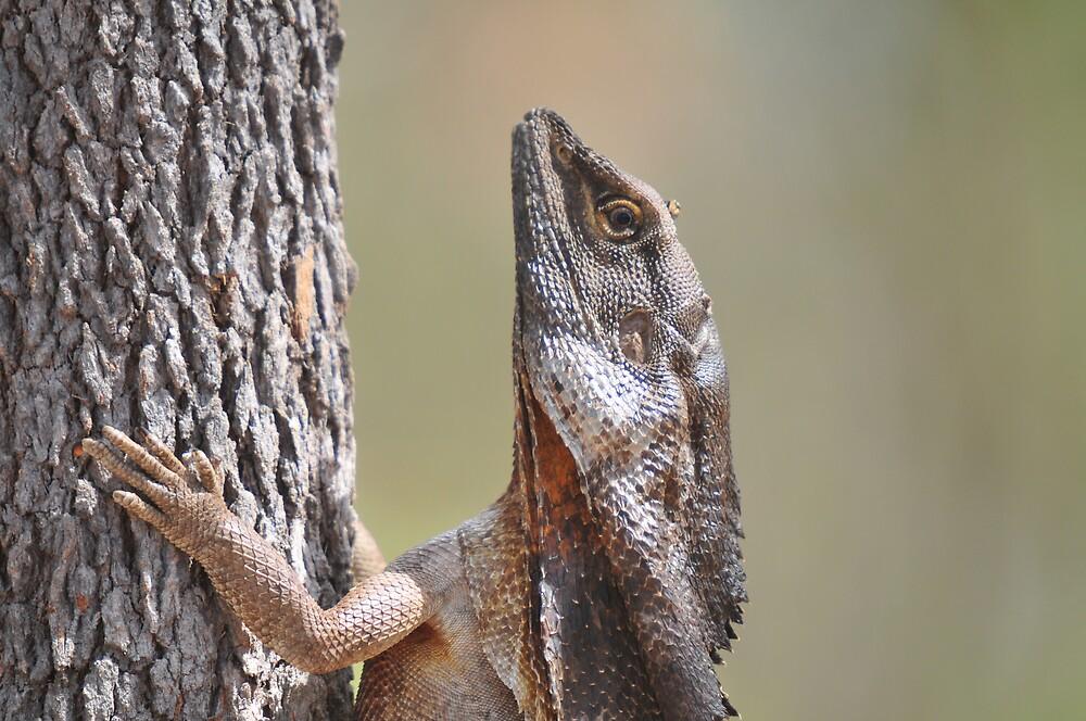 Lizard meets Tree. by esp7