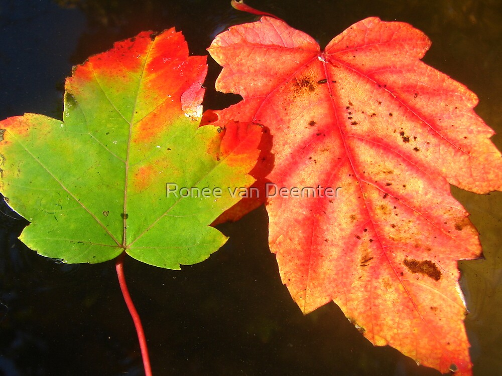 Autumn, floating on water by Ronee van Deemter