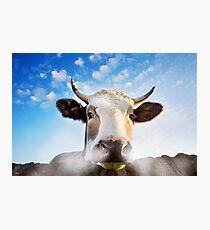 Schnaubender Stier Fotodruck