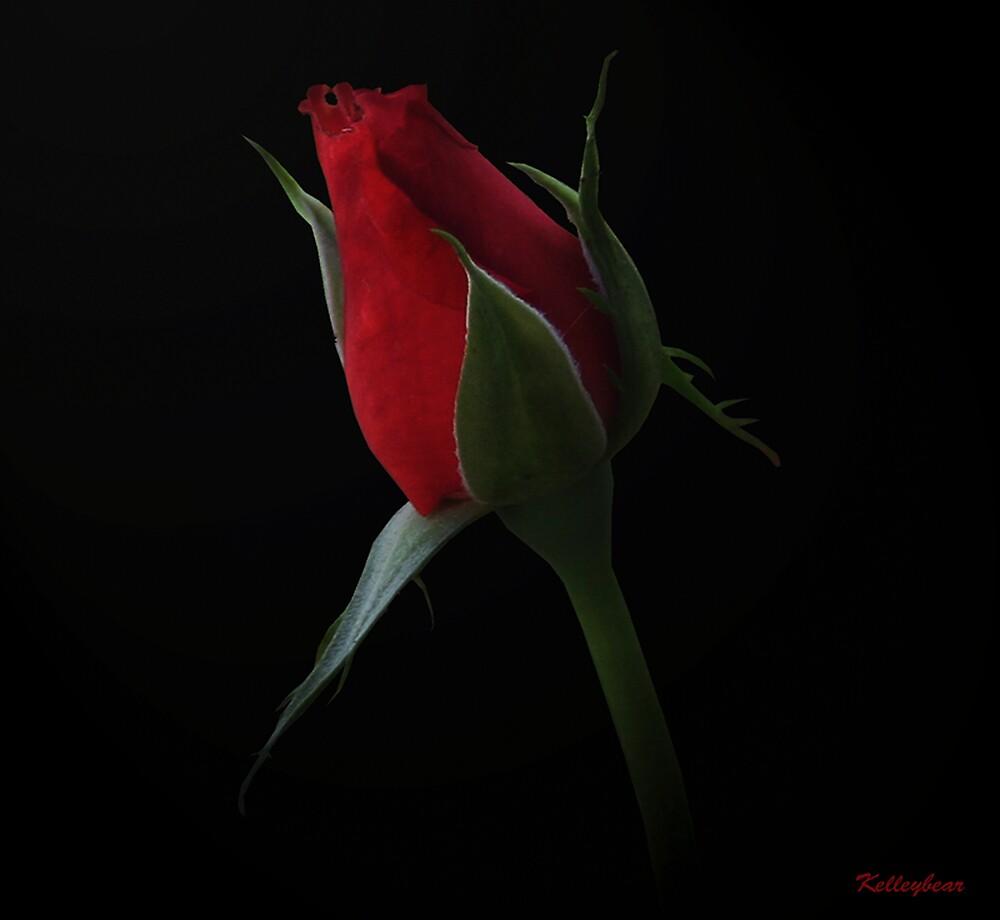 A Red Rose  by kelleybear