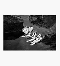 Fern Floating On The Water Photographic Print