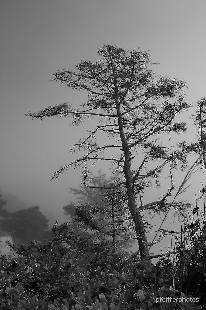 Misty Pine by pfeifferphotos