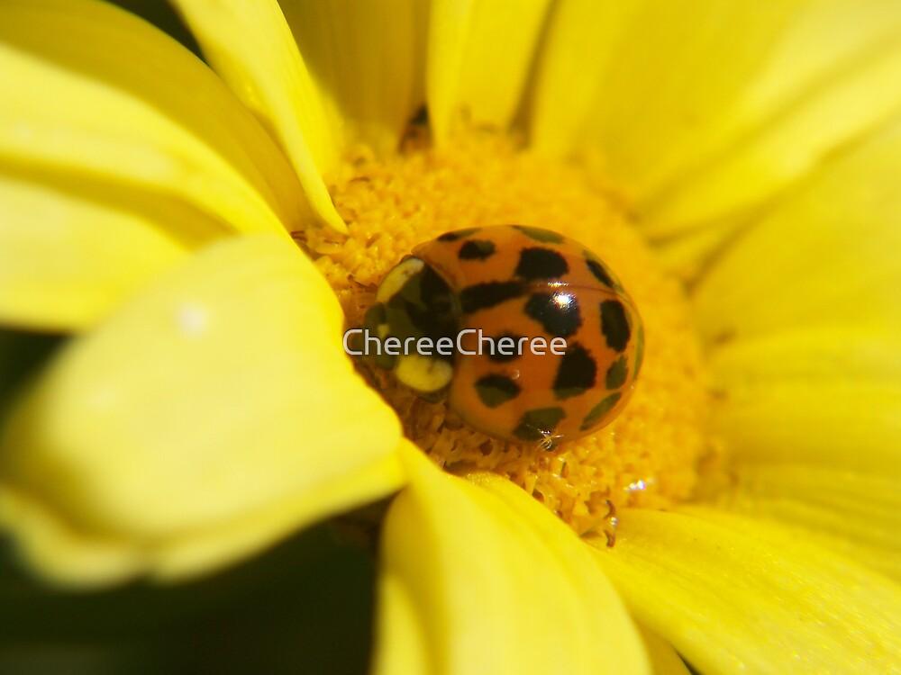 ladybug by ChereeCheree