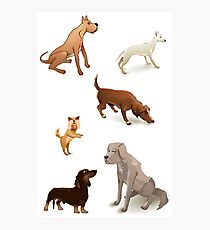 Dogs pack. Photographic Print
