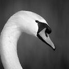 Mute Swan by George Wheelhouse