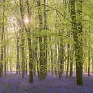 One Last Bluebell Wood Photo by George Wheelhouse
