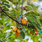 A crab Apple Snack by buddybetsy