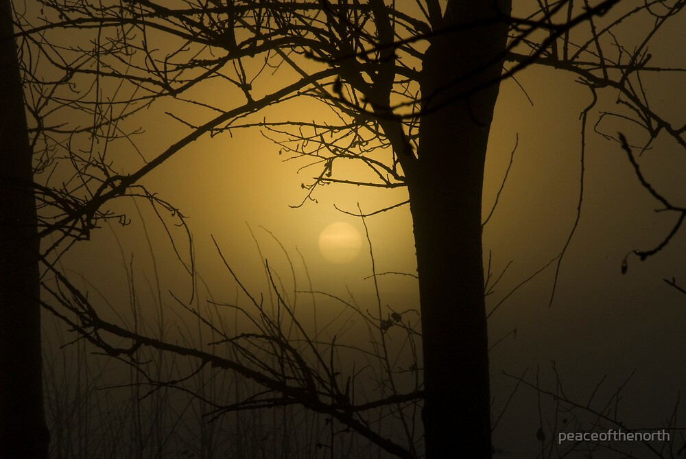 One Tree and a Foggy Sun by peaceofthenorth