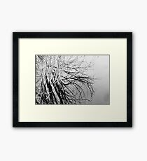 Water Trees Framed Print