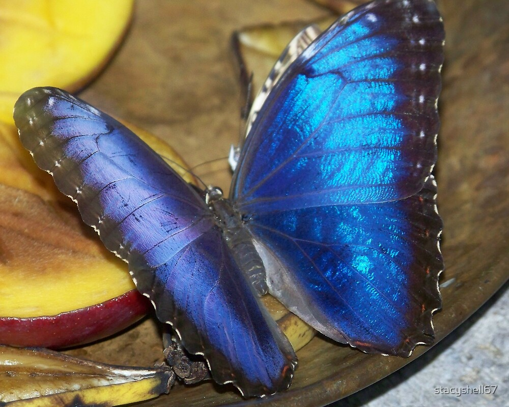 Electric Blue by stacyshell67