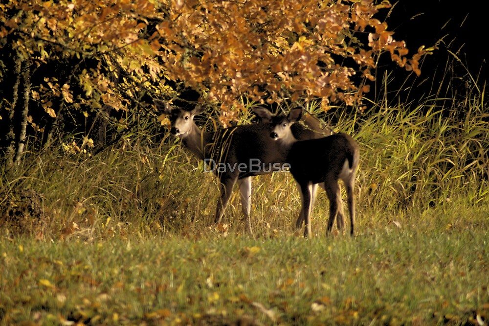 Black Tail by DaveBuse