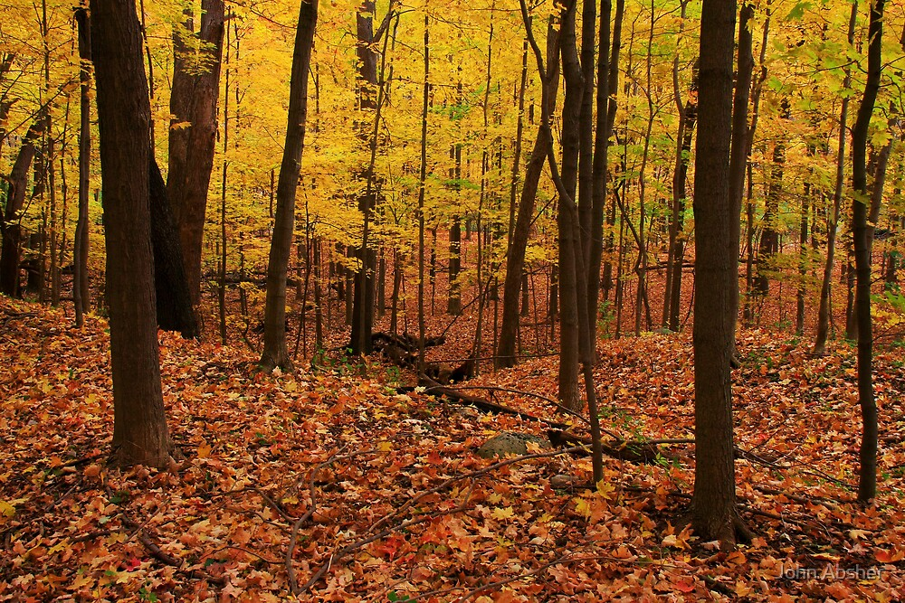 Fall In The Woods by John Absher