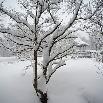 ... A freshly fallen silent shroud of snow by wolftinz