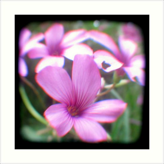 Garden of Weeds by Kitsmumma
