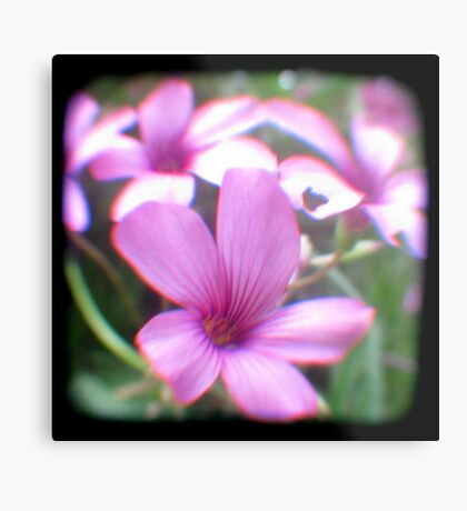 Garden of Weeds Metal Print