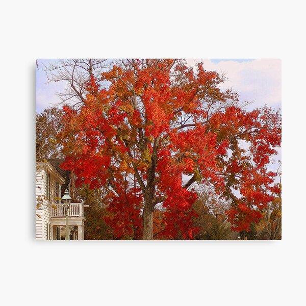 Firey Tree Canvas Print