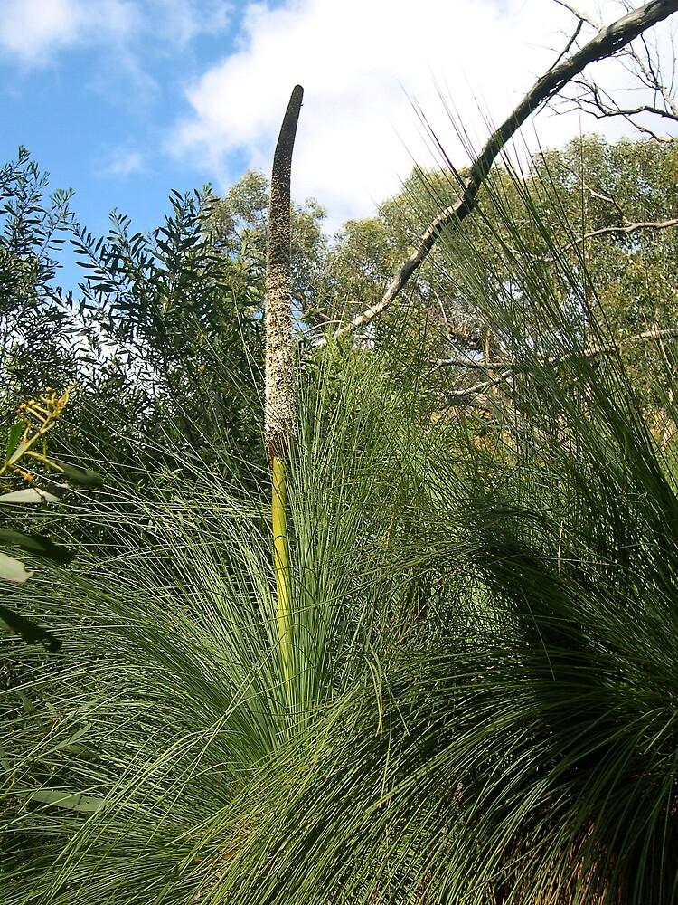 Grass Tree by Jackal