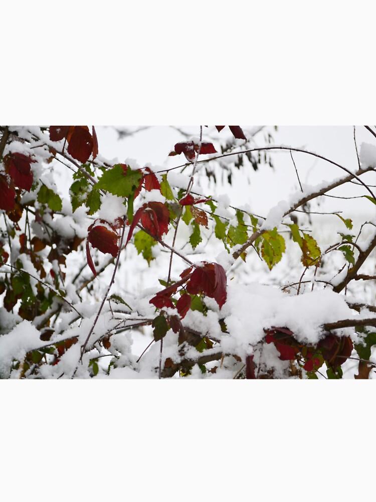 Winter by MiramVi