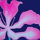 Pink flower 4 by pracha