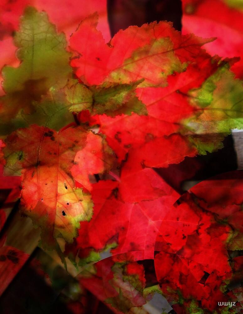 Autumn Brilliance by wwyz