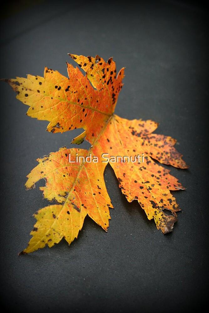 Leaf portrait by Linda Sannuti