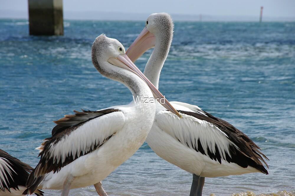 Pelican by Wzard