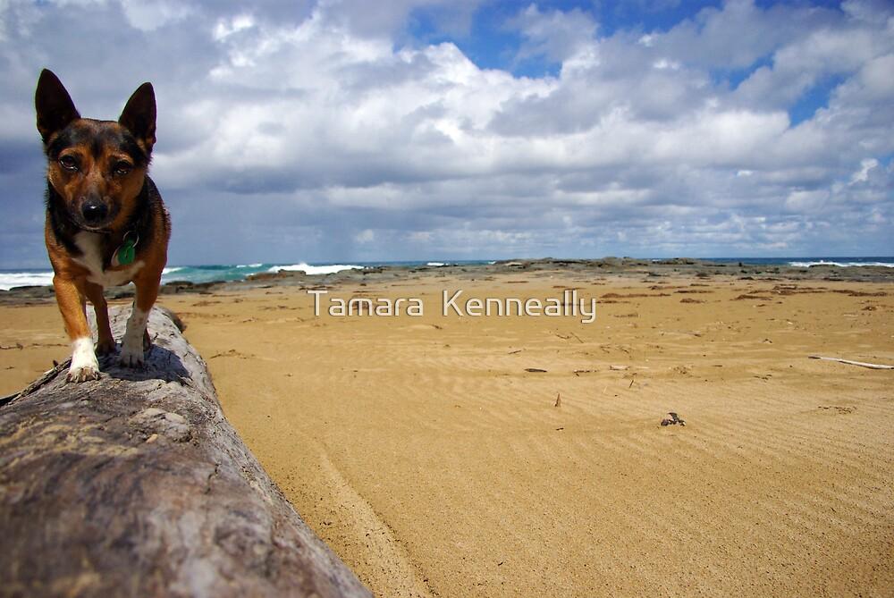 Beach Boy Buster by Tamara  Kenneally