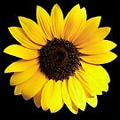 Shining Bright! by Heather Friedman