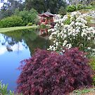 in the Japanese garden at Emu Valley rhodo garden, Burnie, Tasmania by gaylene