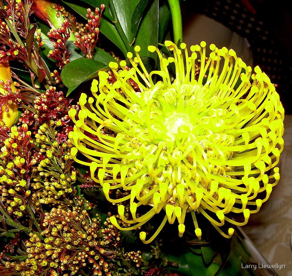 Unknown  Flower....... Family of ET... by Larry Llewellyn