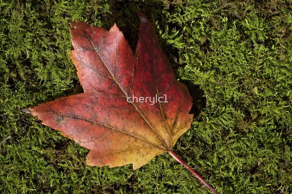 Maple leaf by cherylc1
